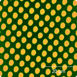 50 x 50 micron image of standard test sample with 100 nm tall circular columns