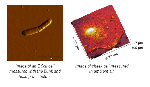 E. Coli cell and cheek cell by Atomic Force Microscope